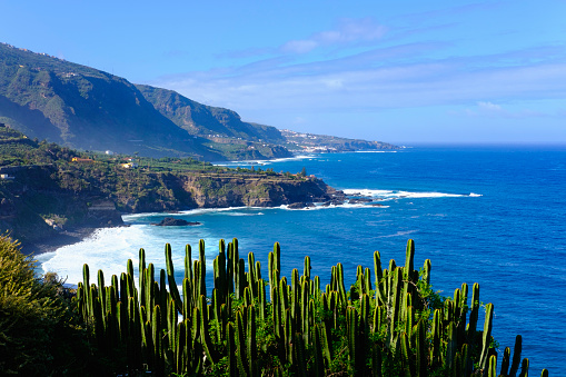 Atlantic Islands「Spain, Canary Islands, Tenerife, Los Realejos, Punta del Guindaste, Canary Island Spurge」:スマホ壁紙(6)