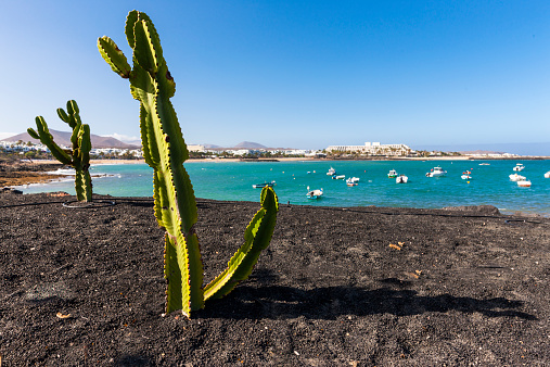 Atlantic Islands「Spain, Canary Islands, Lanzarote, cactuses at Costa Teguise」:スマホ壁紙(4)
