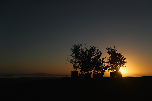 Planting「Native Trees Planted At The Summit Of One Tree Hill」:写真・画像(12)[壁紙.com]