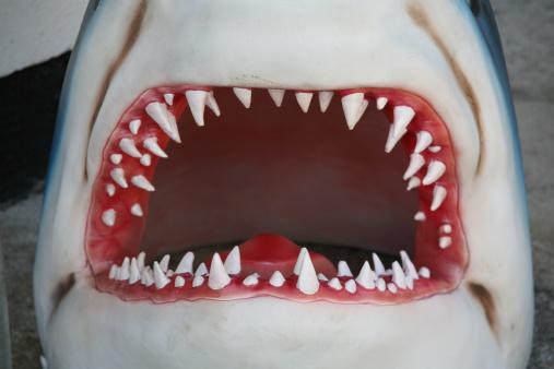 Shark「Shark Jaw」:スマホ壁紙(15)