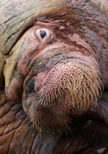 Vertebrate「Hamburg Zoo Baby Animals Inventory」:写真・画像(16)[壁紙.com]