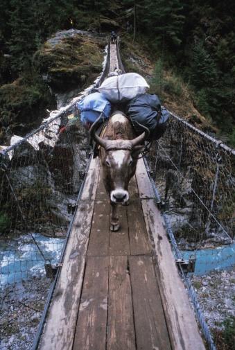 Khumbu「Ox carries a load across a wooden bridge」:スマホ壁紙(5)