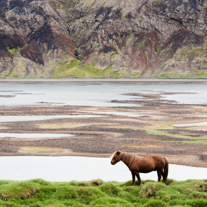 Horse「Icelandic volcanic landscape」:スマホ壁紙(17)