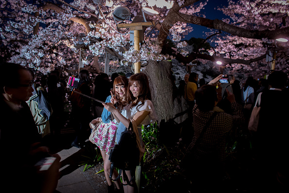 Cherry Blossom「Japan's Flower Viewing Tradition」:写真・画像(12)[壁紙.com]