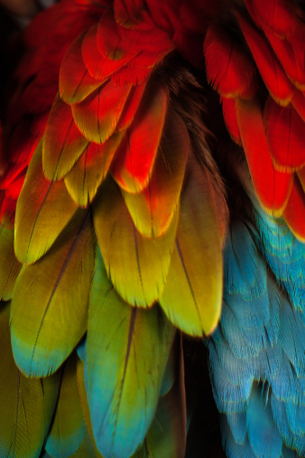Part Of「Feathers on a Green Winged Macaw」:スマホ壁紙(0)