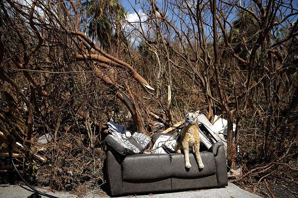犬「Florida Begins Long Recovery After Hurricane Irma Plows Through State」:写真・画像(4)[壁紙.com]