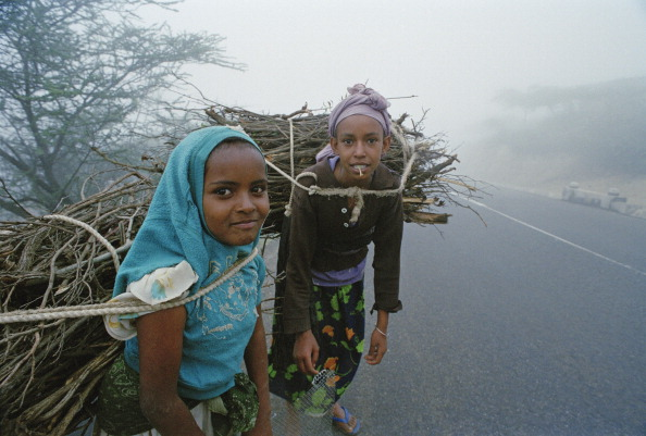 Picking Up「Firewood In Eritrea」:写真・画像(6)[壁紙.com]