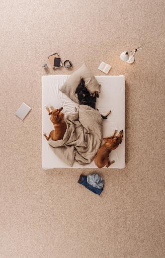 Three Animals「Three dogs lying in bed, sleeping」:スマホ壁紙(2)