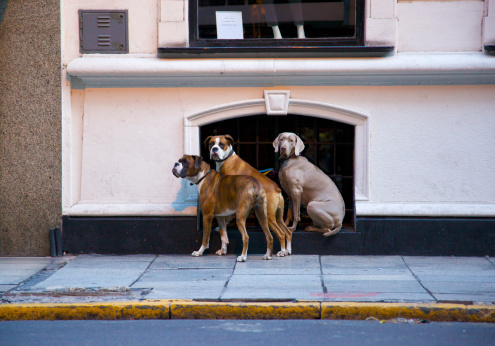 Buenos Aires「Three dogs waiting the dog-walker」:スマホ壁紙(13)
