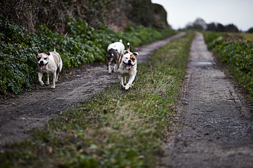 Great Yarmouth - Norfolk「Three dogs out on a walk on a winters day」:スマホ壁紙(9)