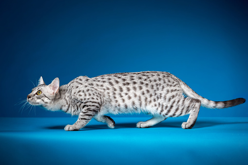 Crouching「Crouching Cat」:スマホ壁紙(18)