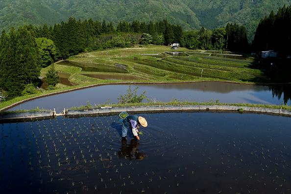 Bestof「Rice Planting Gets Underway As Coronavirus Pandemic Continues To Hit Japan's Economy」:写真・画像(17)[壁紙.com]
