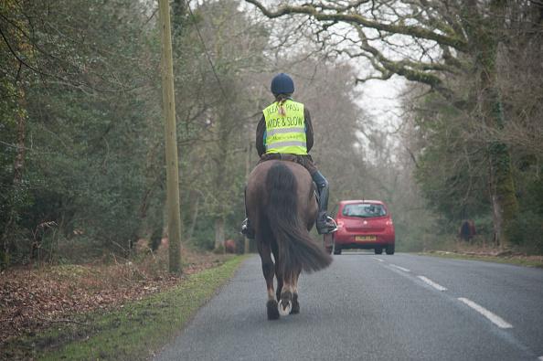 Horseback Riding「Rider on horseback on country road in New Forest 2014」:写真・画像(9)[壁紙.com]
