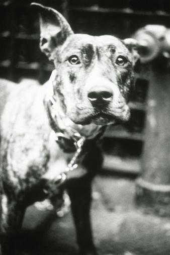 Furious「Chained dog」:スマホ壁紙(12)