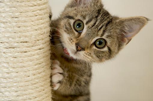 Kitten「キトン」:スマホ壁紙(15)