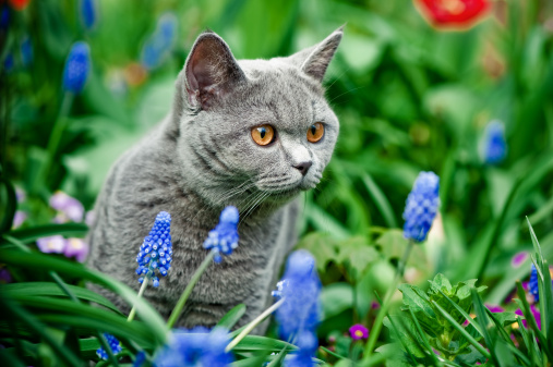 Animals Hunting「Cute kitten walking oudoors」:スマホ壁紙(7)