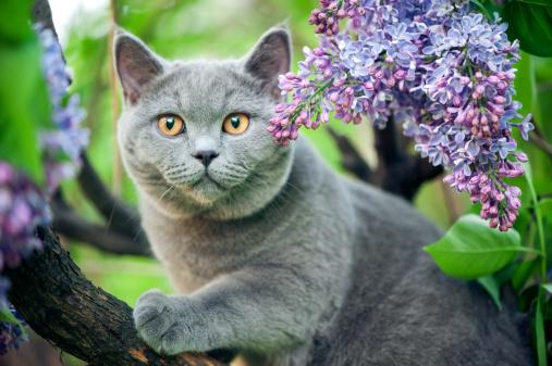 ショートヘア種の猫「かわいい子猫のウォーキング、ツリー」:スマホ壁紙(8)