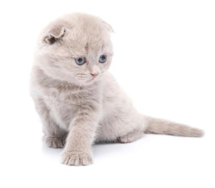 Kitten「かわいい子猫」:スマホ壁紙(4)