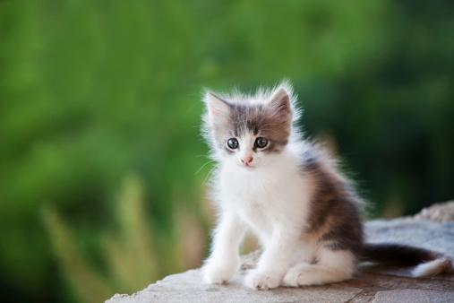 Kitten「かわいい子猫」:スマホ壁紙(3)
