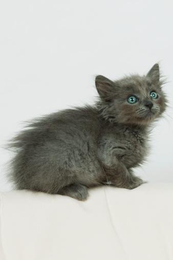 子猫「Cute kitten with green eyes looking up」:スマホ壁紙(13)