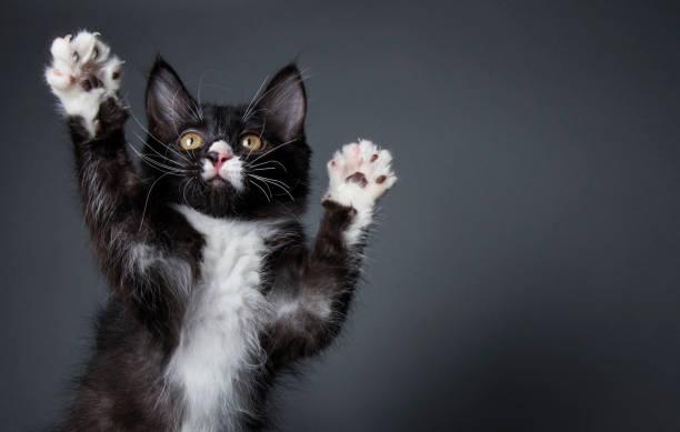 かわいい子猫:スマホ壁紙(壁紙.com)