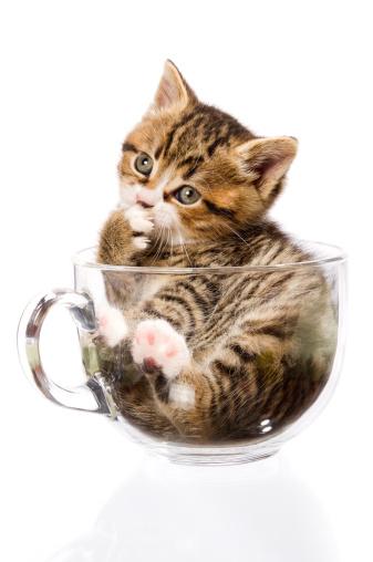 Kitten「かわいい子猫」:スマホ壁紙(16)