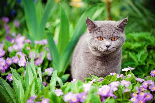 ショートヘア種の猫「かわいい子猫 oudoors」:スマホ壁紙(19)