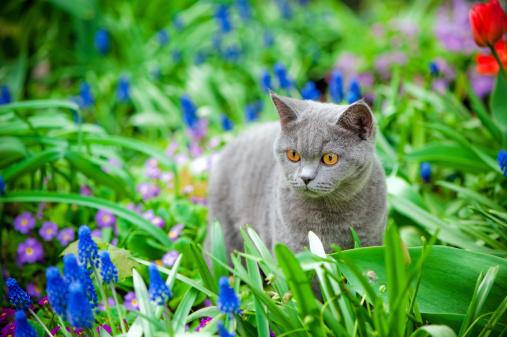 Kitten「Cute kitten oudoors」:スマホ壁紙(9)