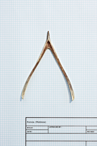 Specimen Holder「Wishbone on graph paper」:スマホ壁紙(14)