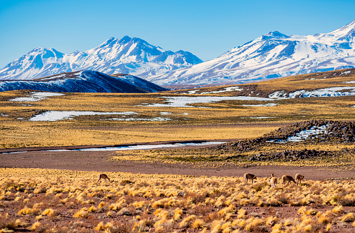 Vicuna「Atacama desert - Andes altiplano - arid climate  - Vicuna - snow - Andes hills  - valley」:スマホ壁紙(7)