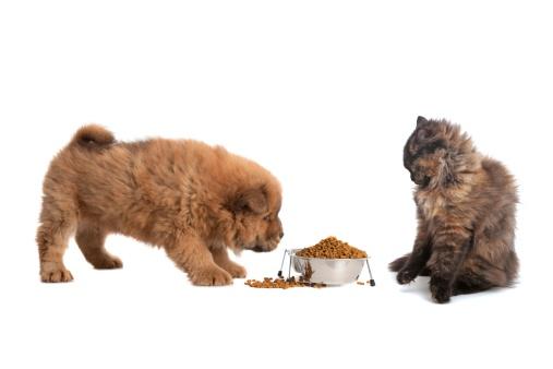 Purebred Cat「share」:スマホ壁紙(16)