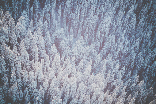 Ski Resort「Aerial Winter Forest Landscape, Whistler Blackcomb」:スマホ壁紙(8)