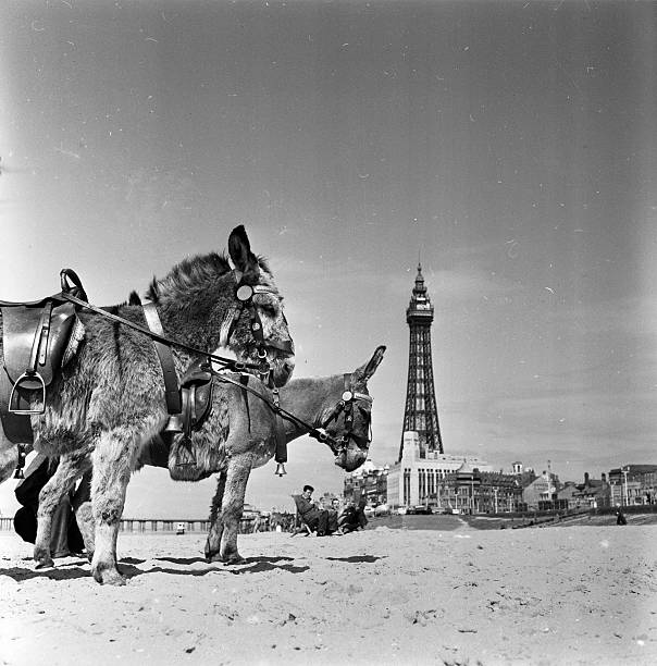 Blackpool Seafront:ニュース(壁紙.com)