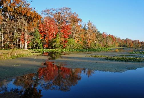 Tallahassee「Fall River Scene」:スマホ壁紙(18)
