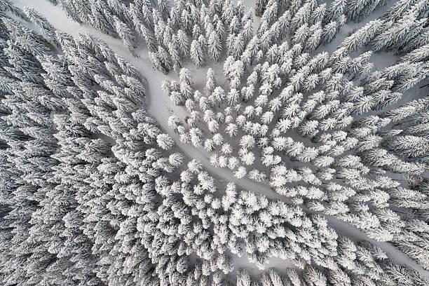 Snow Trail leading through Winter Forest, Bird's-Eye View:スマホ壁紙(壁紙.com)