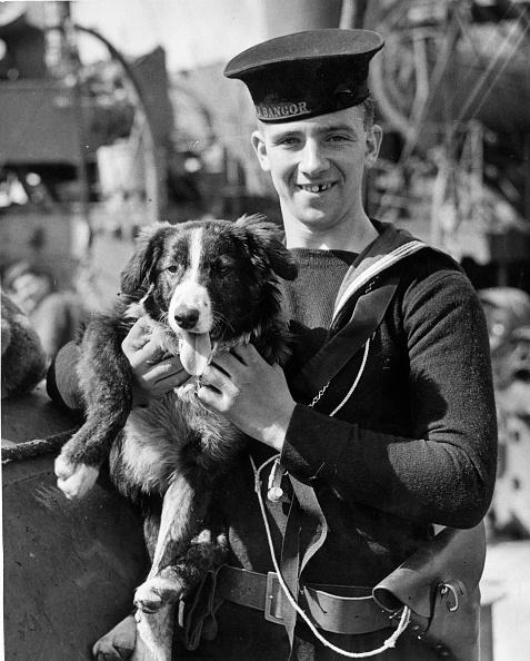 キャラクター「Naval Dog」:写真・画像(9)[壁紙.com]