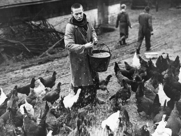 Farm「Poultry Monk」:写真・画像(18)[壁紙.com]