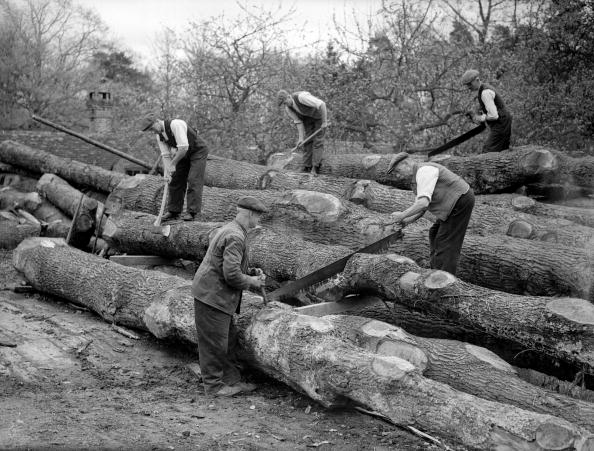 Timber「Sawing Trees」:写真・画像(4)[壁紙.com]