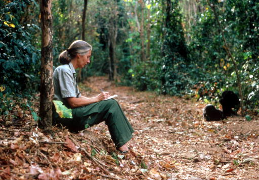 Primate「Scientist Jane Goodall...」:写真・画像(2)[壁紙.com]