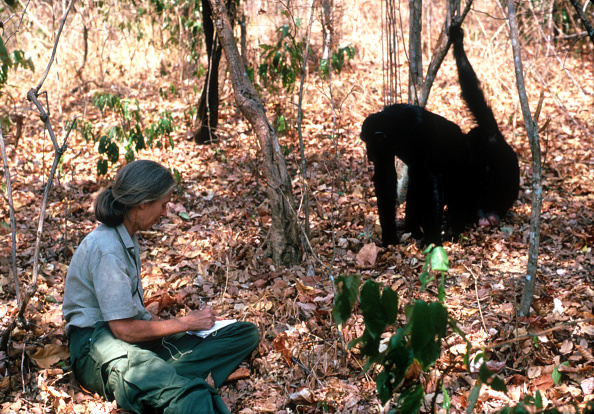 Primate「Scientist Jane Goodall...」:写真・画像(12)[壁紙.com]