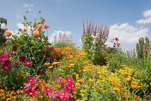 Bloomy garden:スマホ壁紙(壁紙.com)