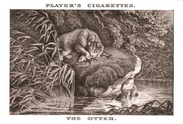 Water's Edge「The Otter」:写真・画像(10)[壁紙.com]