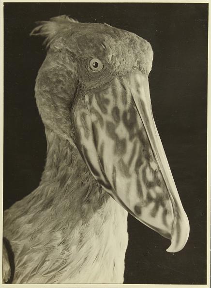 Beak「Exotic Bird」:写真・画像(14)[壁紙.com]