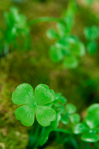四葉のクローバー「Four-leaf clover」:スマホ壁紙(10)