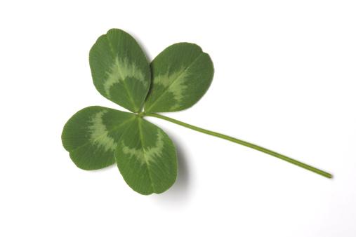 四葉のクローバー「Four-leaf clover, a sign of luck」:スマホ壁紙(6)