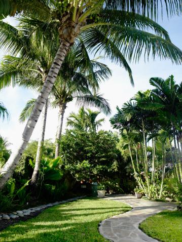 Grove「USA, Florida, Miami, palm trees in tropical garden」:スマホ壁紙(9)