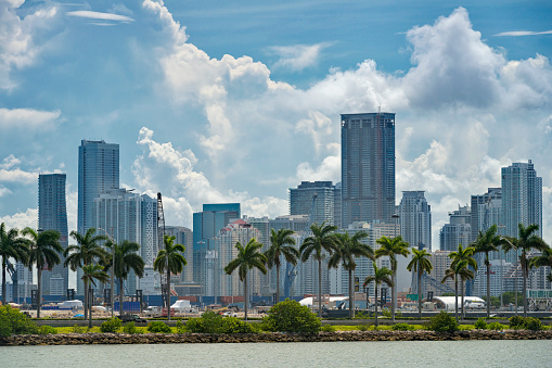 Gulf Coast States「USA, Florida, Miami, Downtown, skyline with high-rises and palm trees」:スマホ壁紙(15)