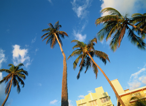Miami Beach「USA, Florida, Miami, South Beach, palm trees, low angle view」:スマホ壁紙(18)