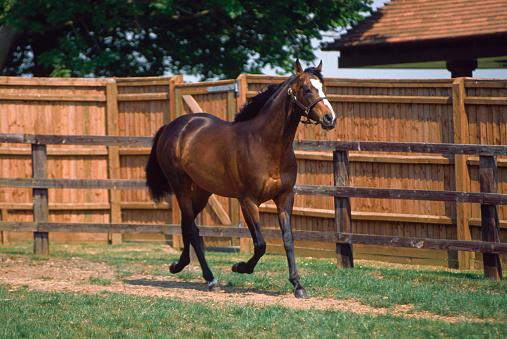 "Stallion「""Mtoto"" at Ashton Upthorpe Stud Farm」:スマホ壁紙(1)"