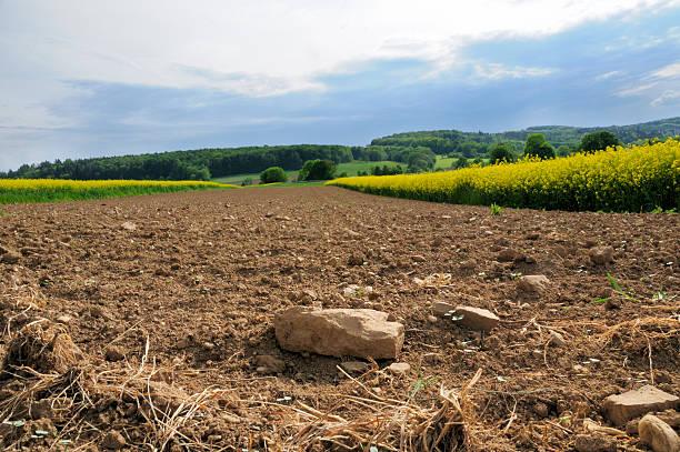 Plowed rocky farmland stony soil between canola fields:スマホ壁紙(壁紙.com)